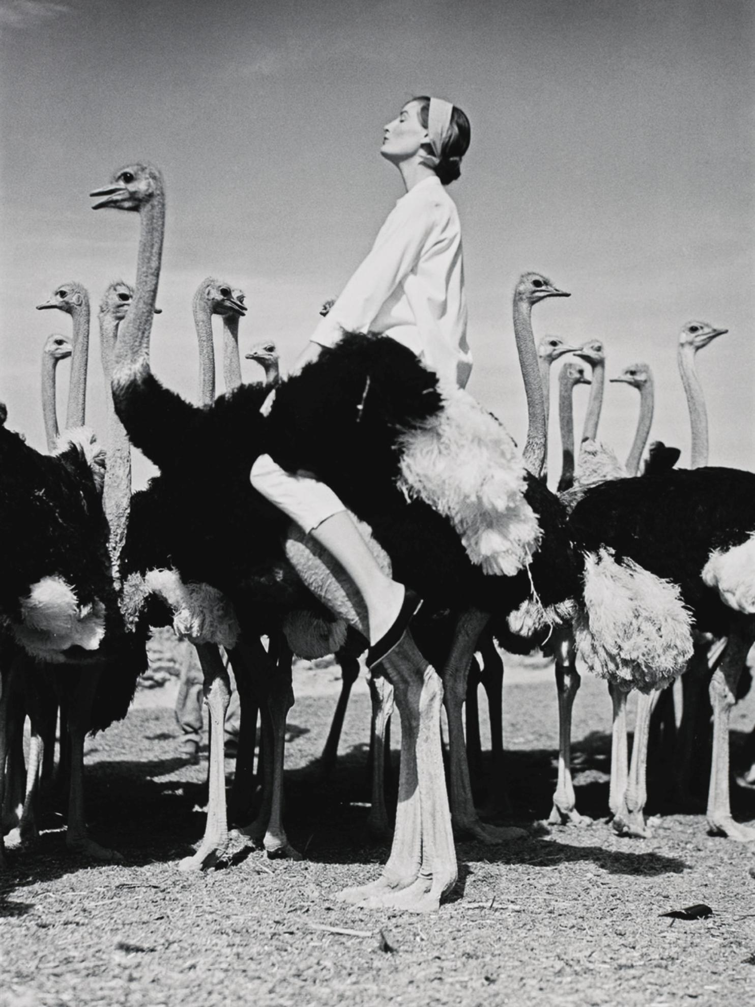 Norman Parkinson-Wenda And Ostriches, South Africa, Vogue-1951