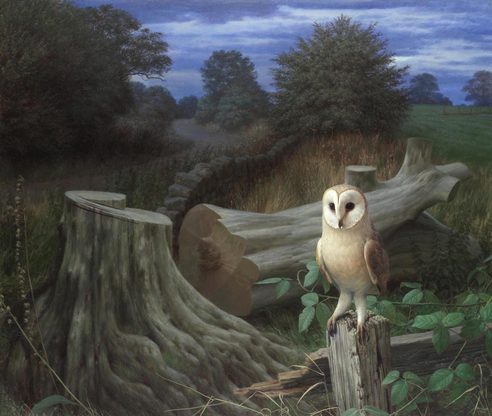 Raymond Booth - Barn Owl At Dawn, Eccup-1980