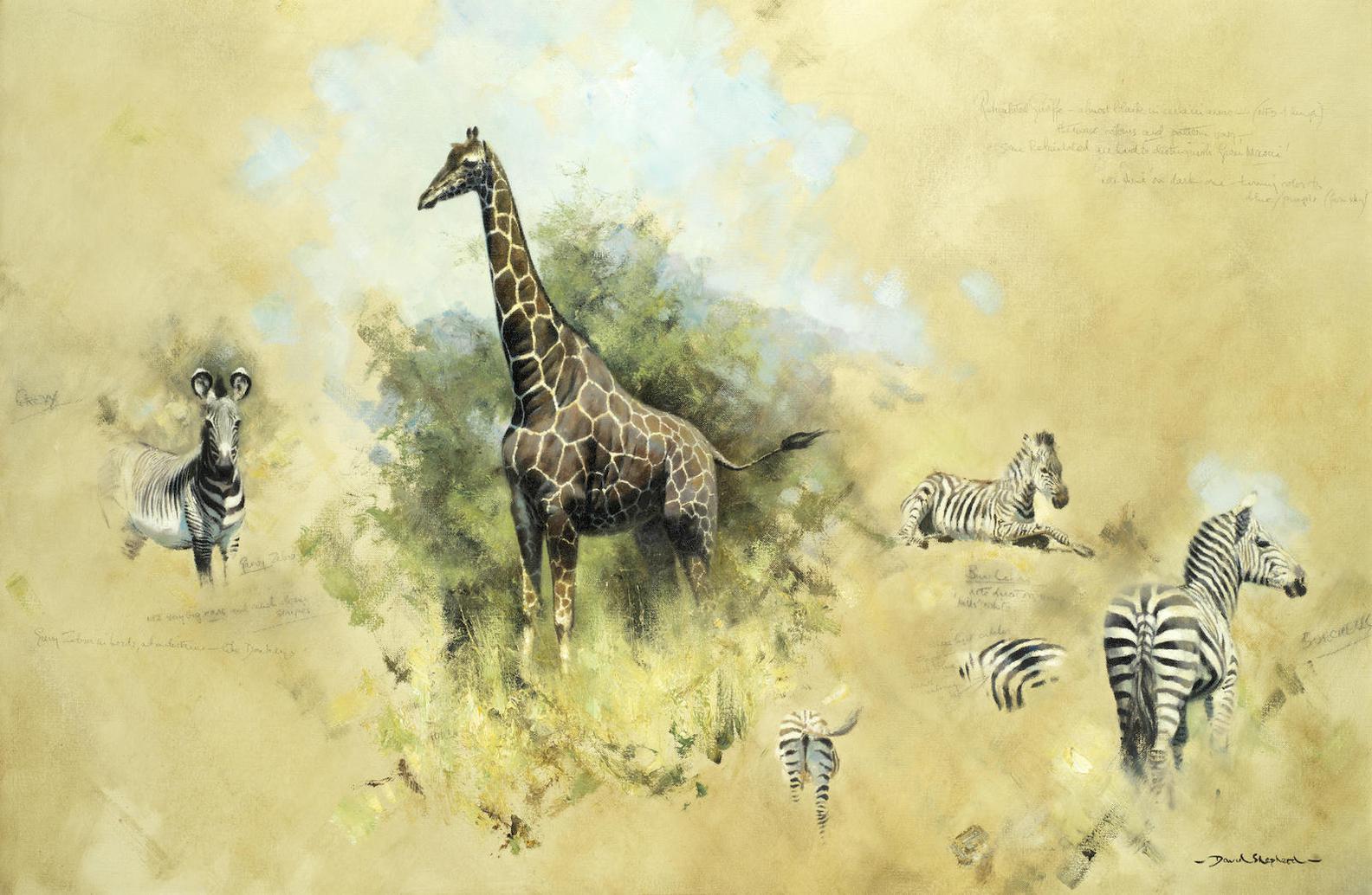 David Shepherd - Studies Of Zebras And Giraffe-