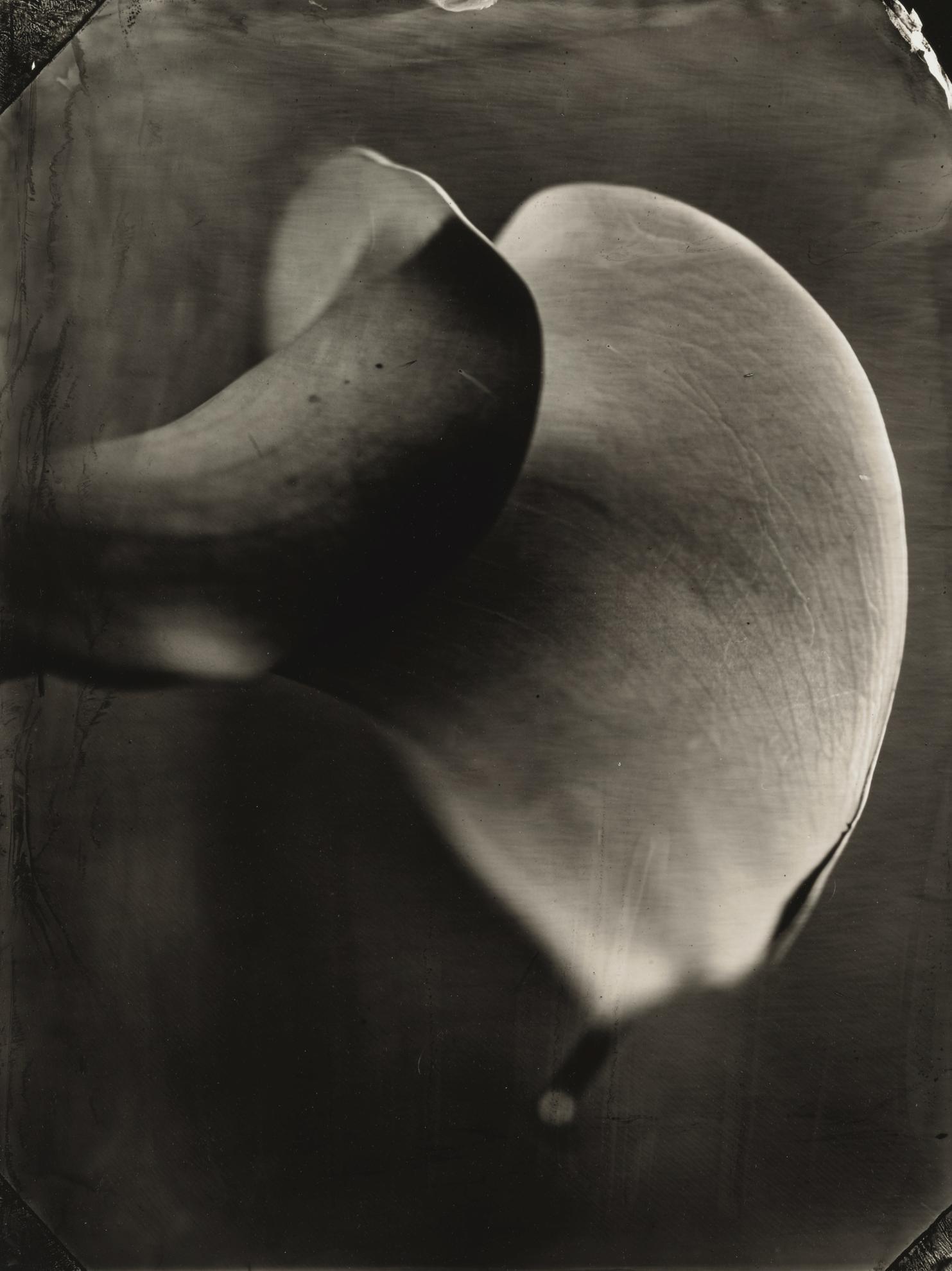 Tom Baril-Calla Lily-2002