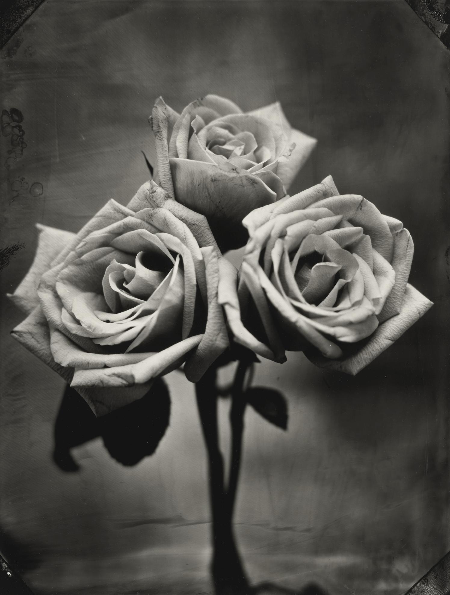Tom Baril-Three Roses-2002