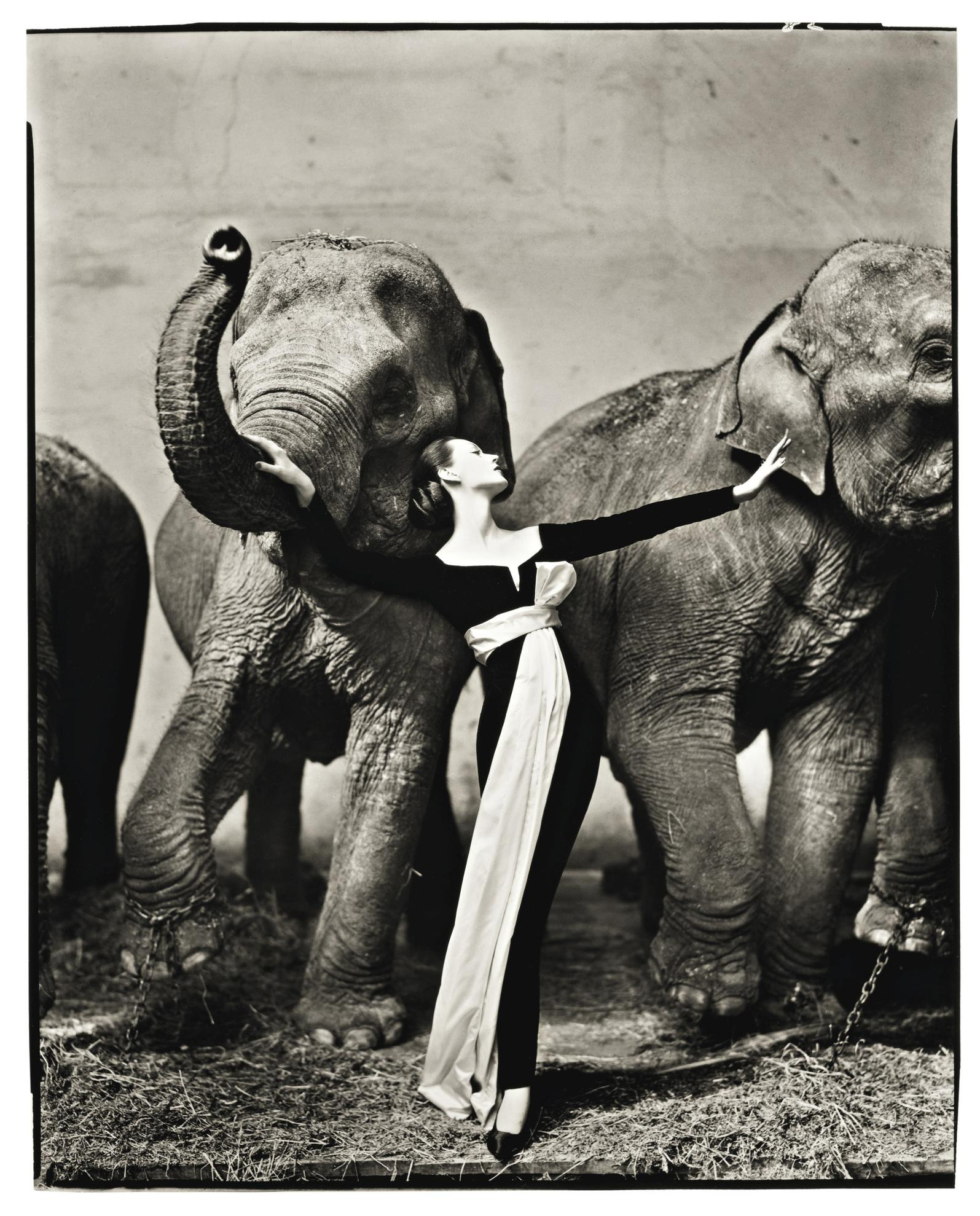 Richard Avedon-Dovima With Elephants, Evening Dress By Dior, Cirque Dhiver, Paris-1955