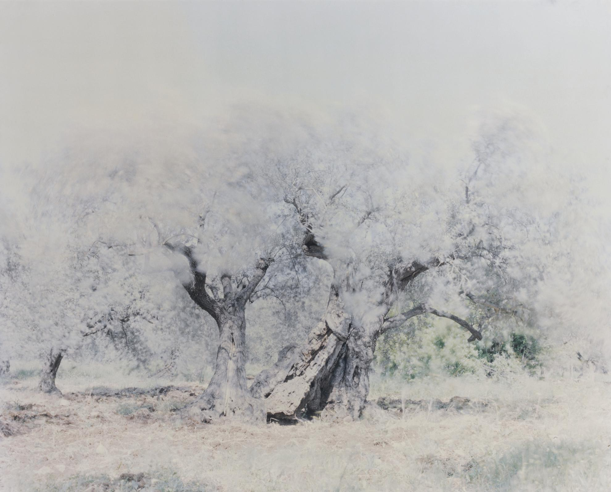 Ori Gersht-Ghost: Olive 14-2004