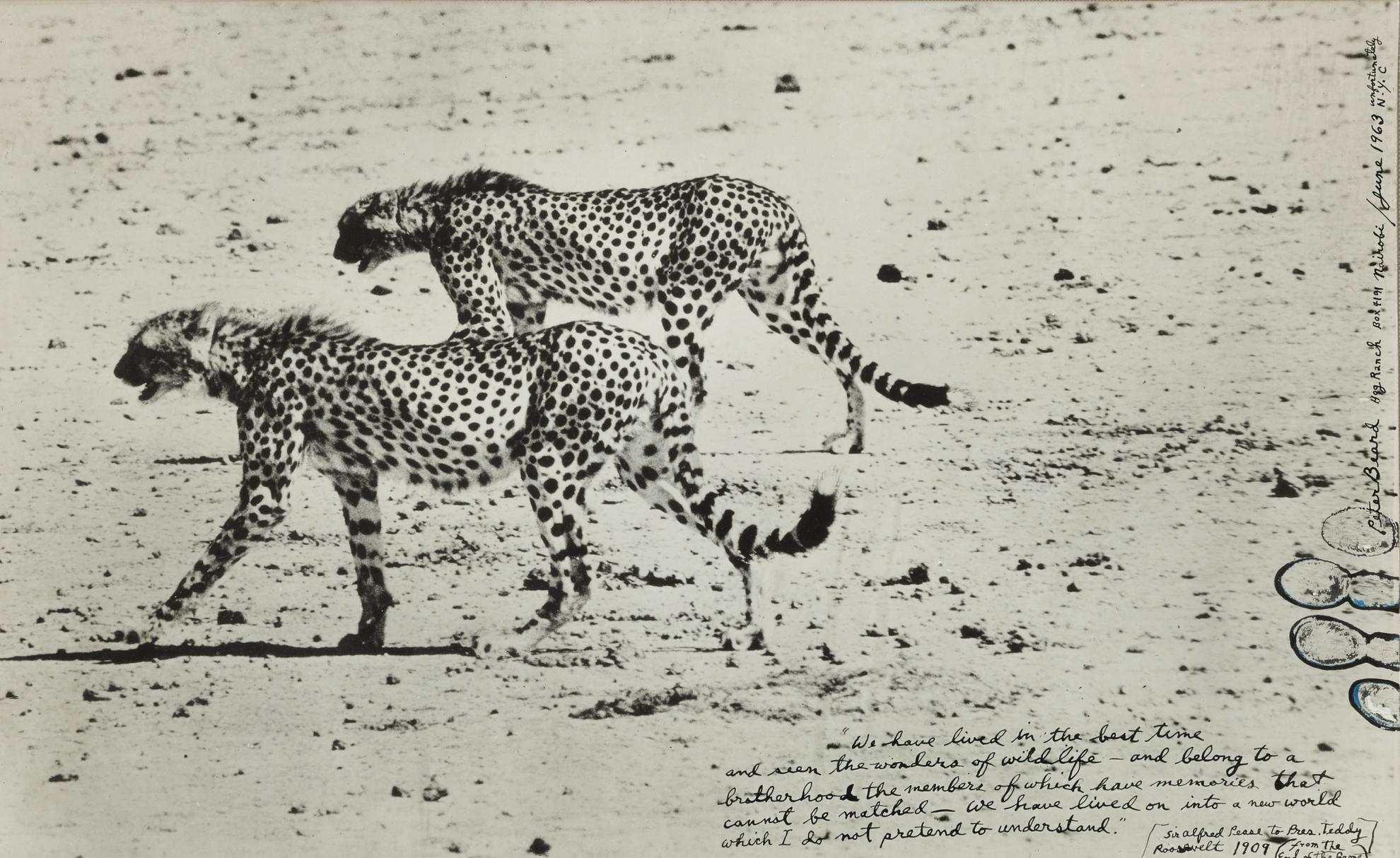 Peter Beard-Hunting Cheetahs On The Taru Desert, Kenya-1960