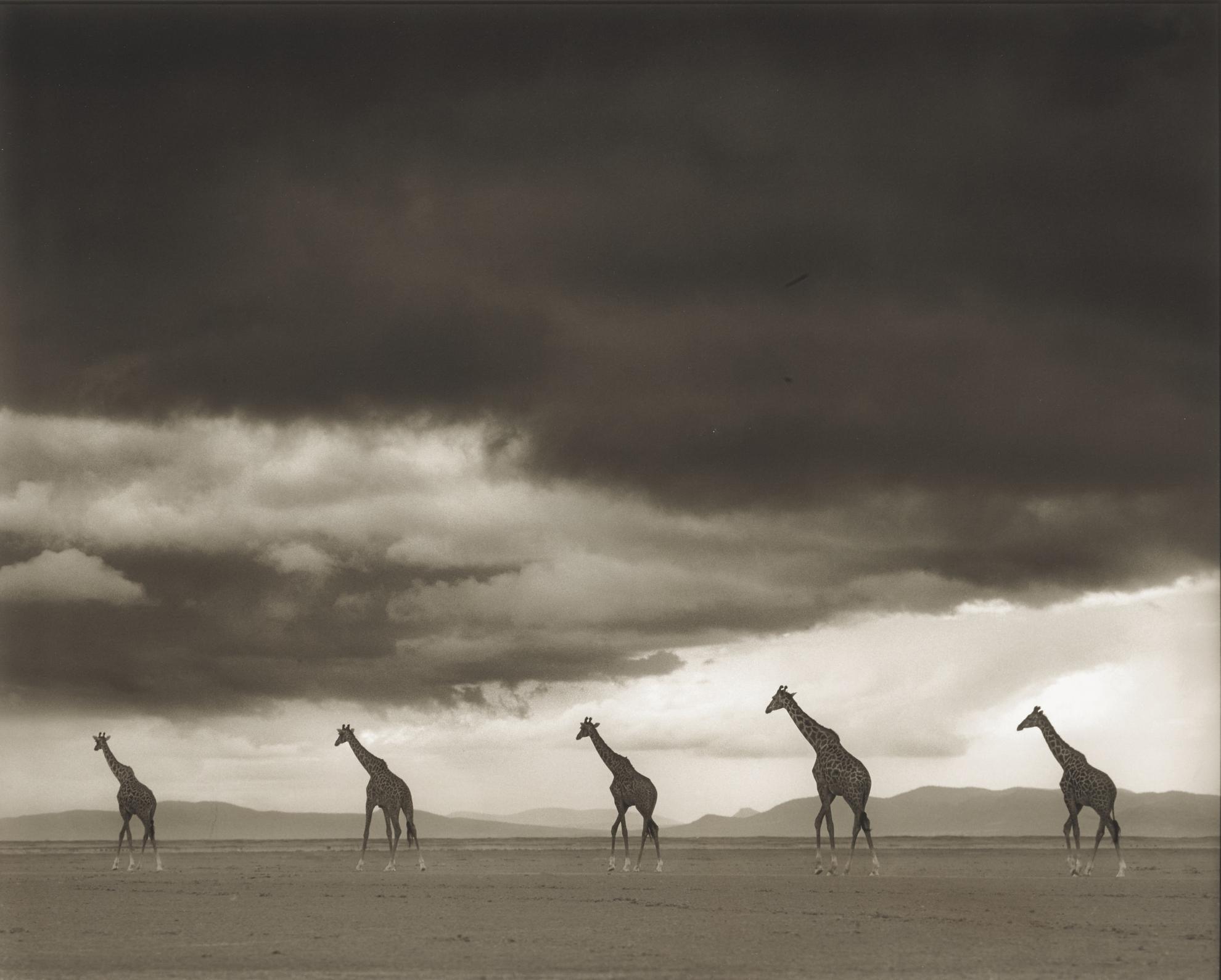 Nick Brandt-Giraffes Crossing Lake Bed, Amboseli-2012
