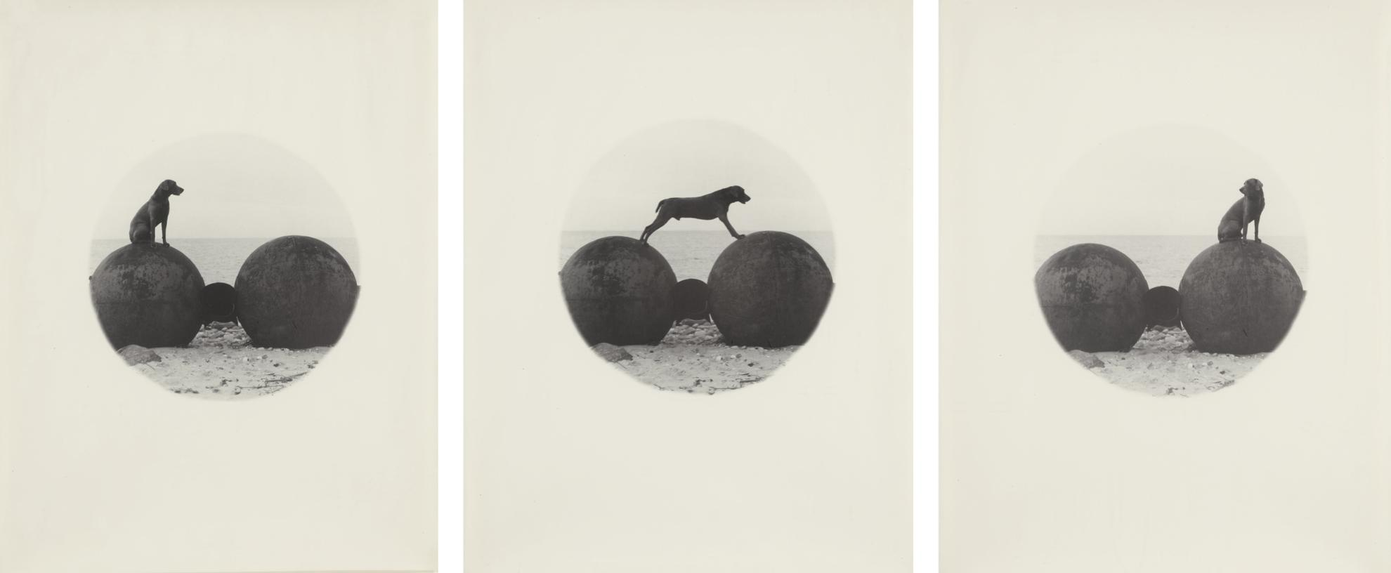 William Wegman-Beach Balls-1979