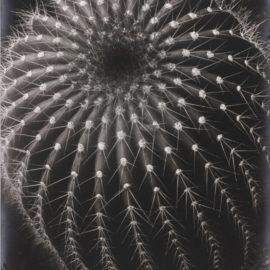 Brett Weston-Untitled (Cactus, Santa Barbara)-1931