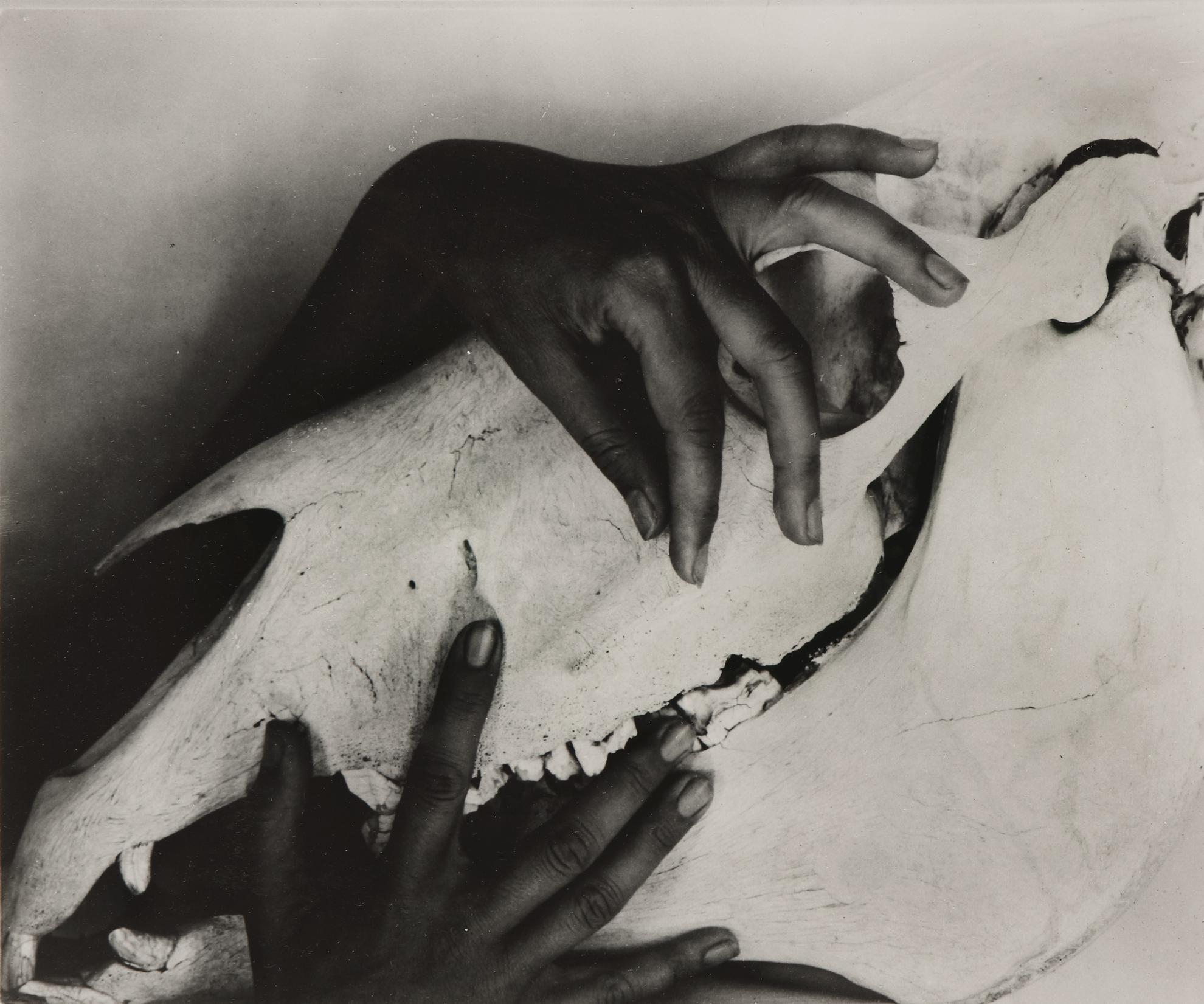 Alfred Stieglitz-Georgia Okeeffe - Hands And Horse Skull-1931