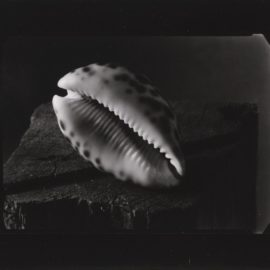 Josef Sudek-Still Life With Shell-1950