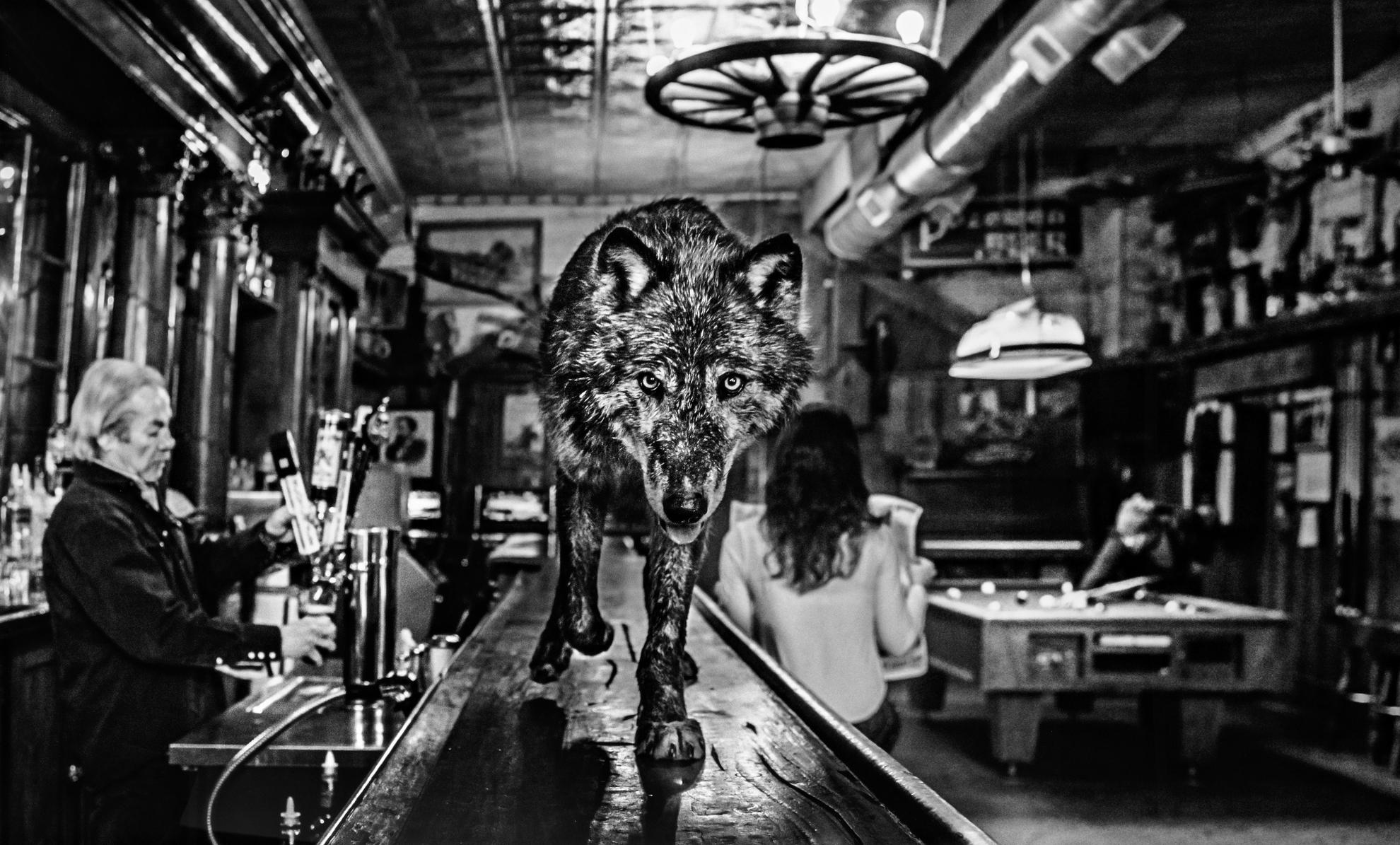 David Yarrow-The Wolf Of Main Street-2015