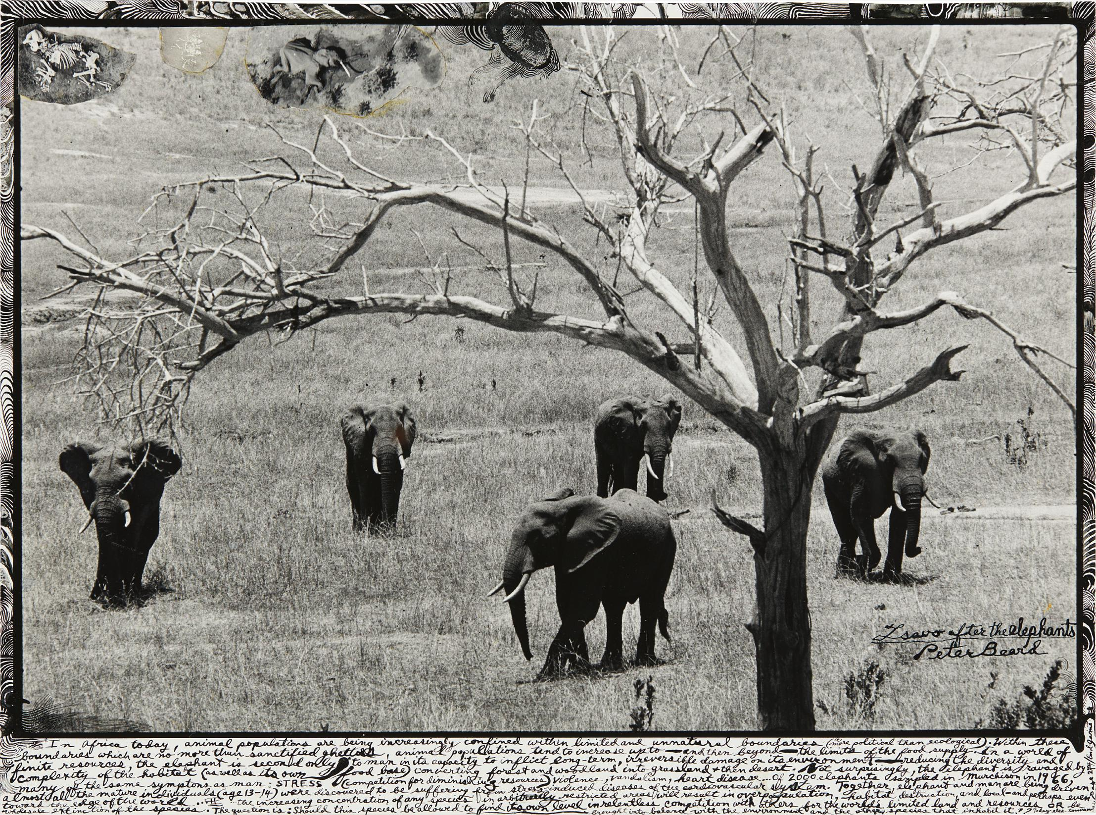 Peter Beard-Untitled (Elephants)-