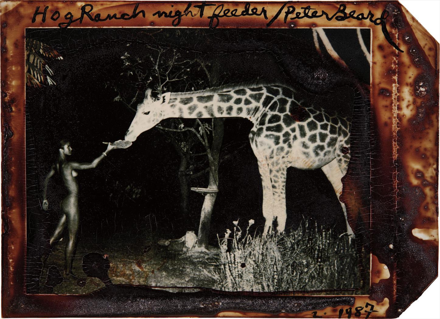 Peter Beard-Maureen Gallagher And A Late Night Feeder, Hog Ranch-1967