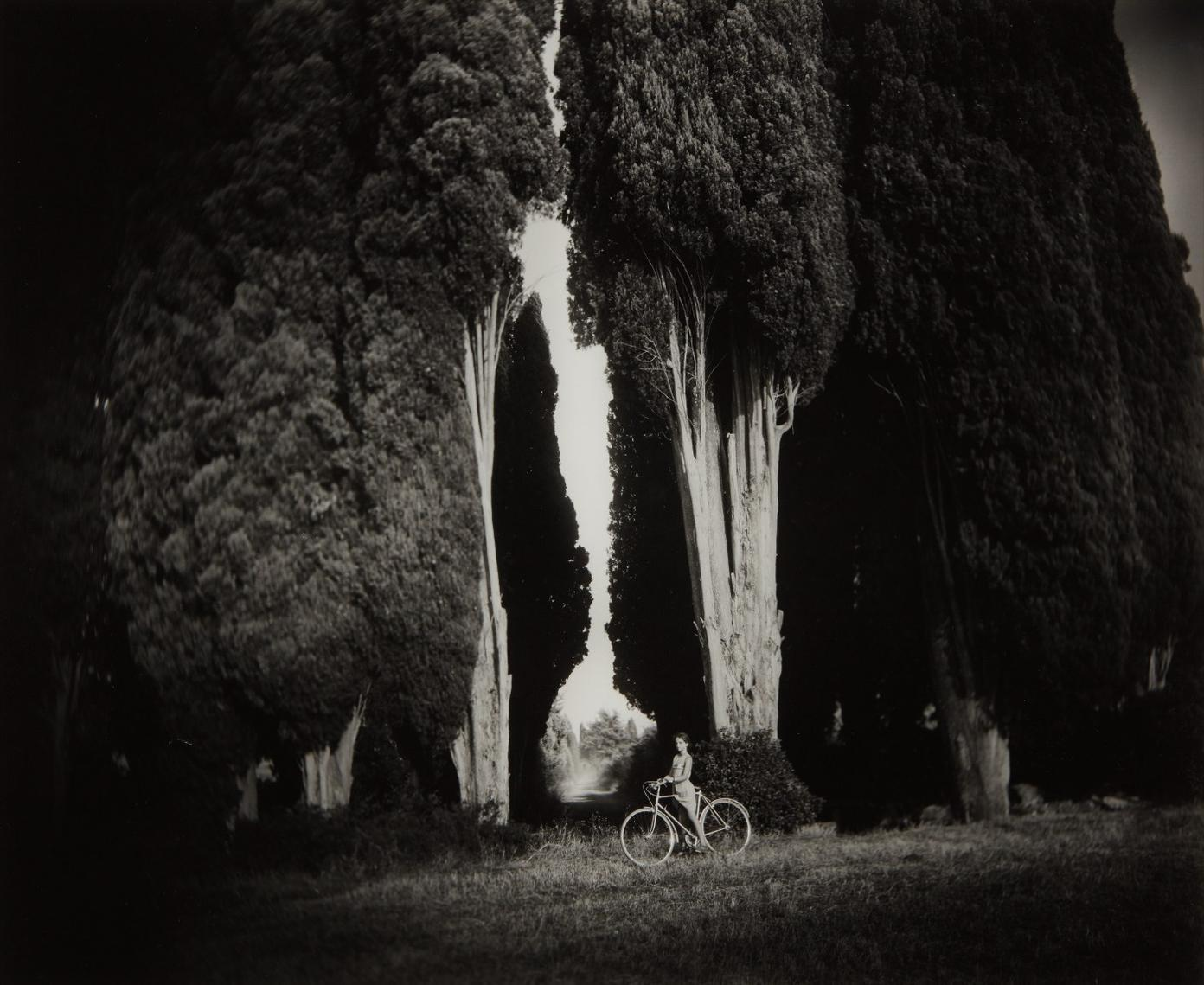 Sally Mann-Sempervirens Stricta-1995