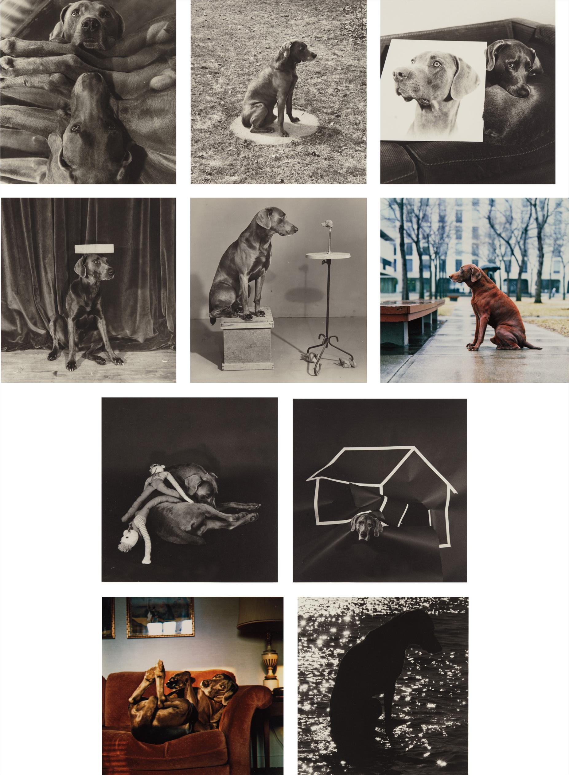 William Wegman-Man Ray-