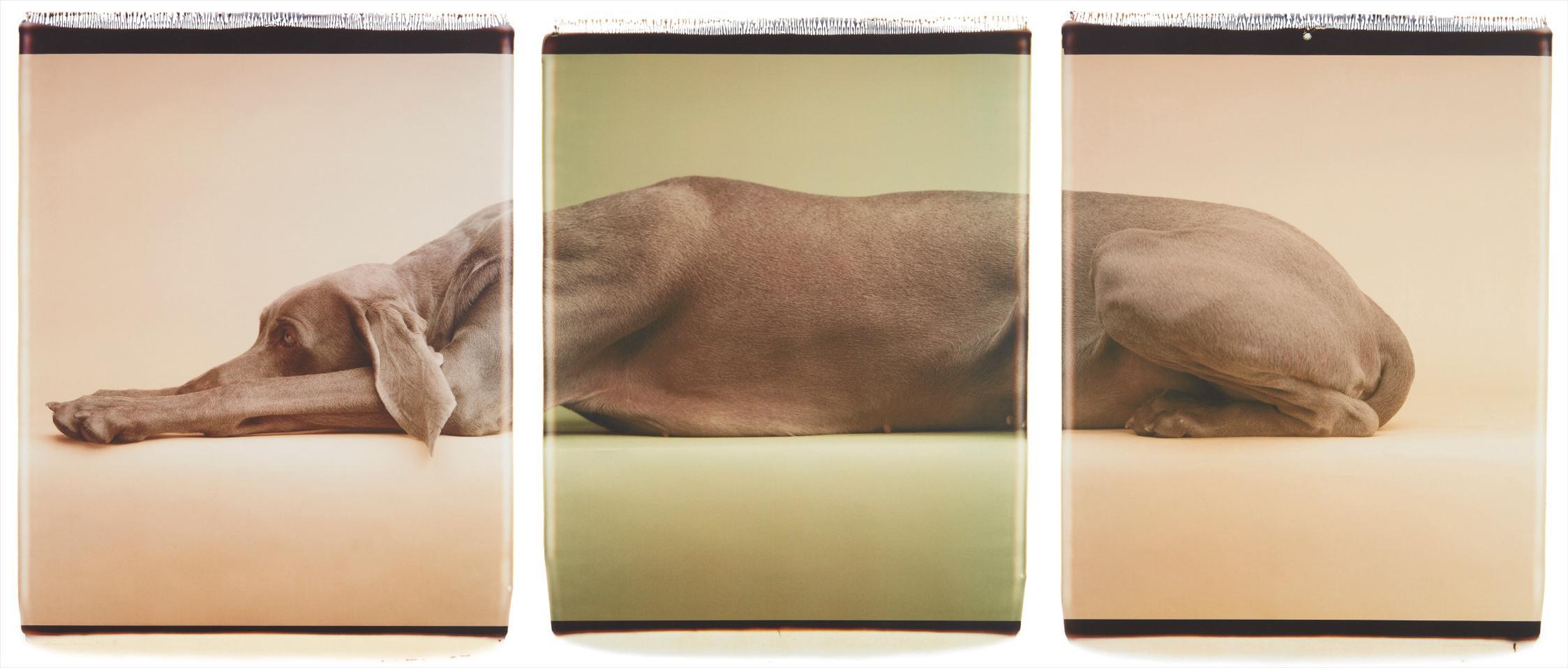 William Wegman-Green Caramelle-1998