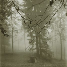 Josef Sudek-Untitled (Woods)-1960