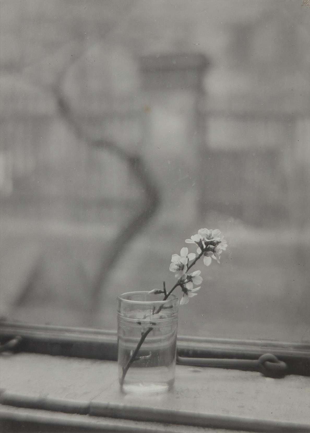 Josef Sudek-From The Window Of My Studio-1953