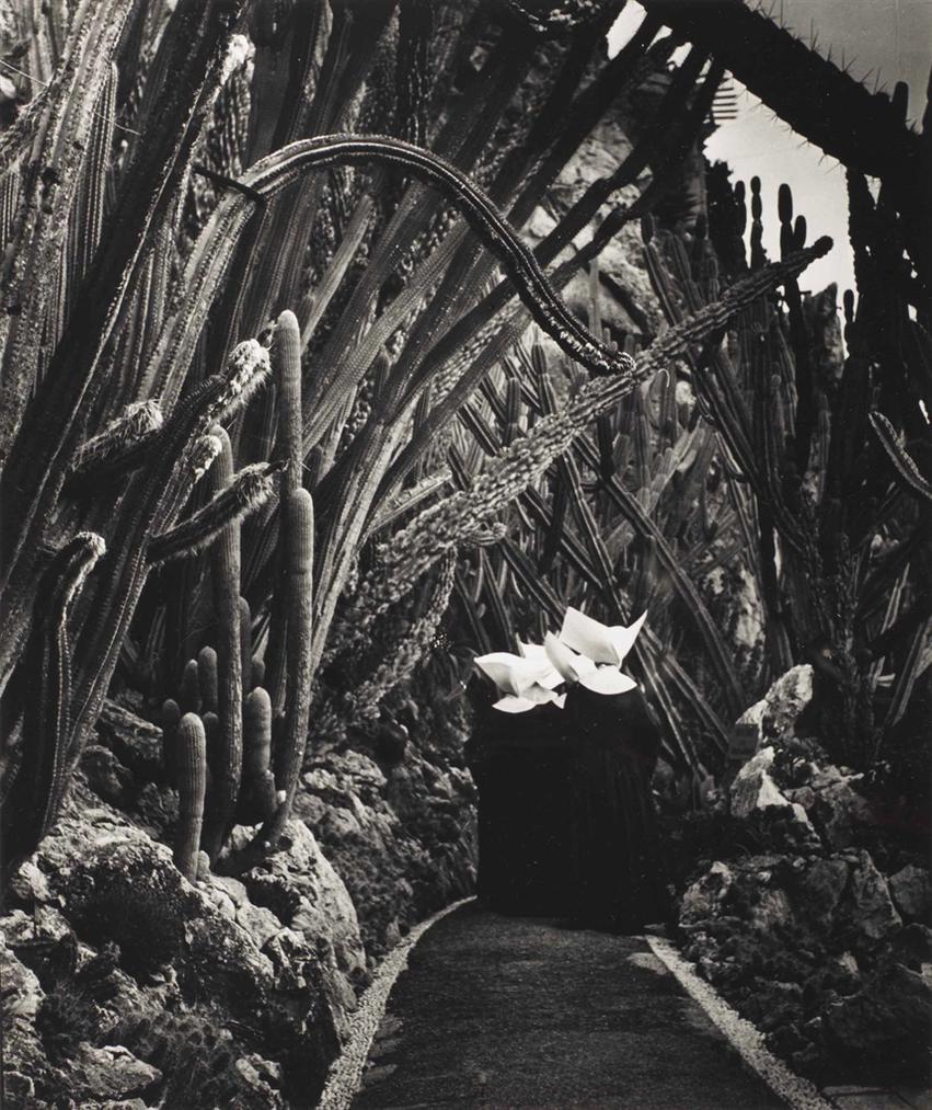 Brassai-Exotic Garden, Monaco-1945