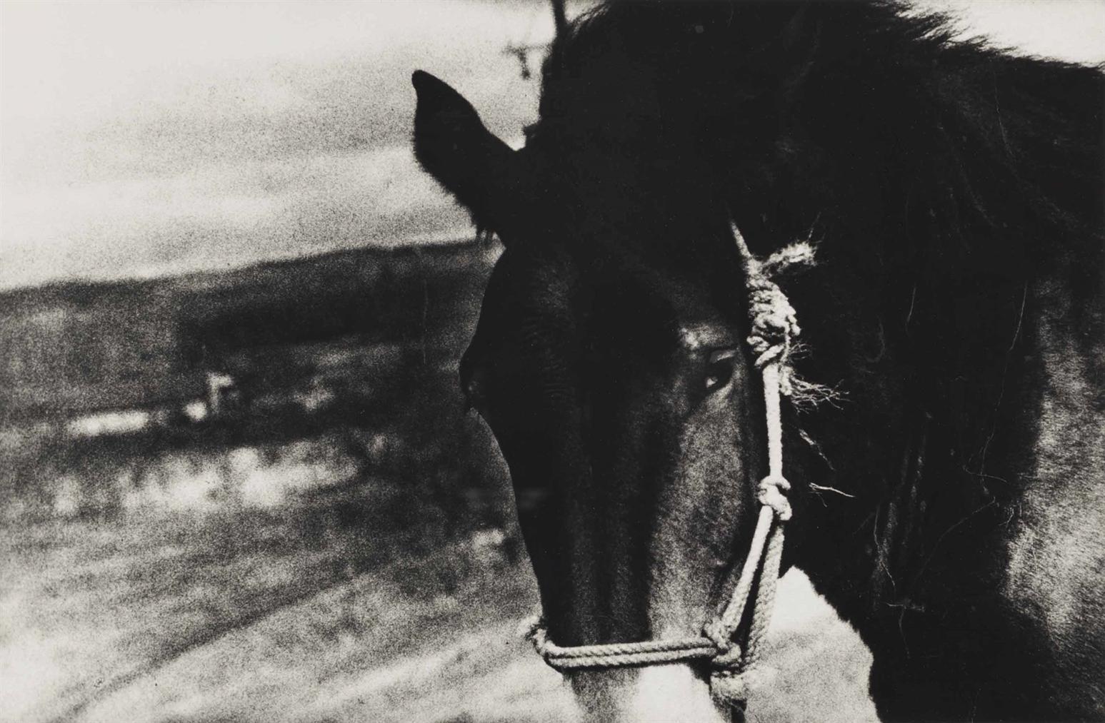 Daido Moriyama-Horse-1970