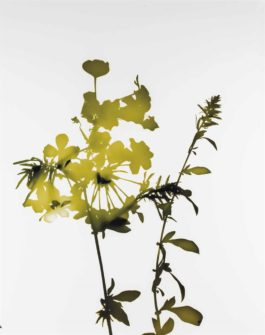 James Welling-029 From Flowers-2004