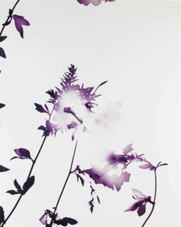 James Welling-005 From Flowers-2004