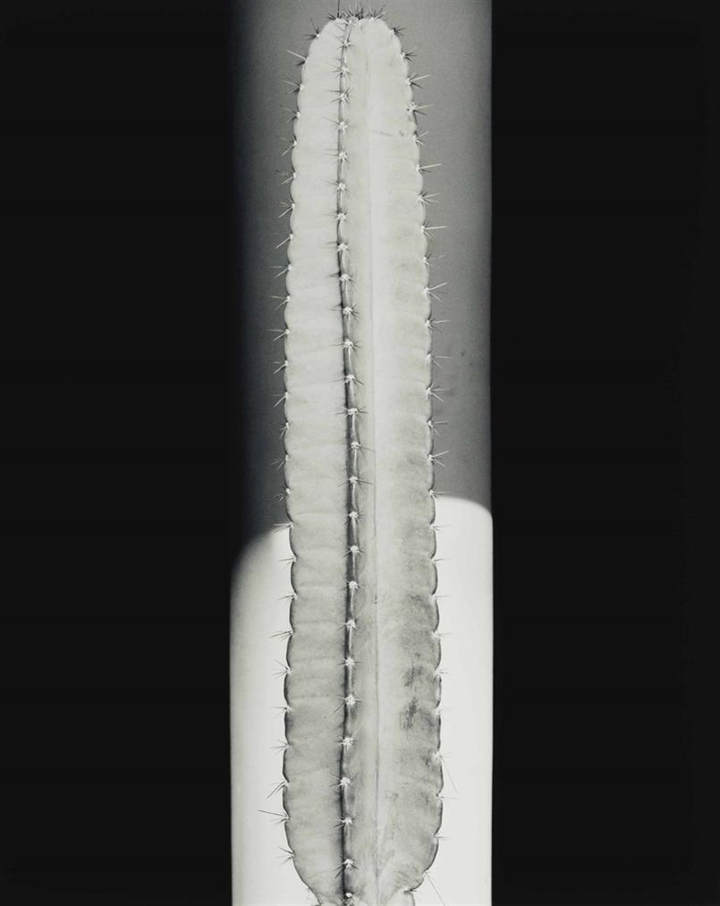 Robert Mapplethorpe-Cactus-1987