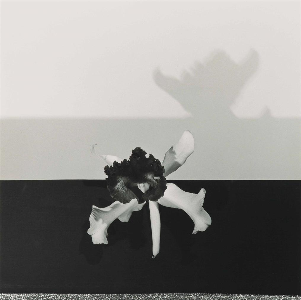 Robert Mapplethorpe-Orchid-1977