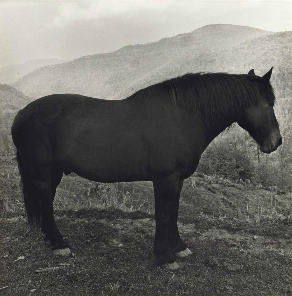 Peter Hujar-Horse In West Virginia Mountains-1969