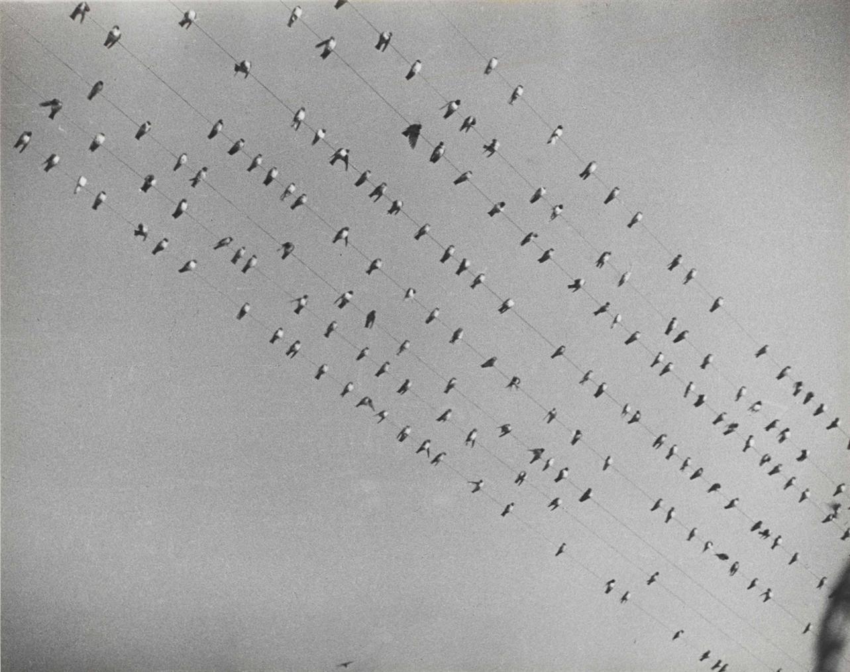 Josef Albers-Birds-1930