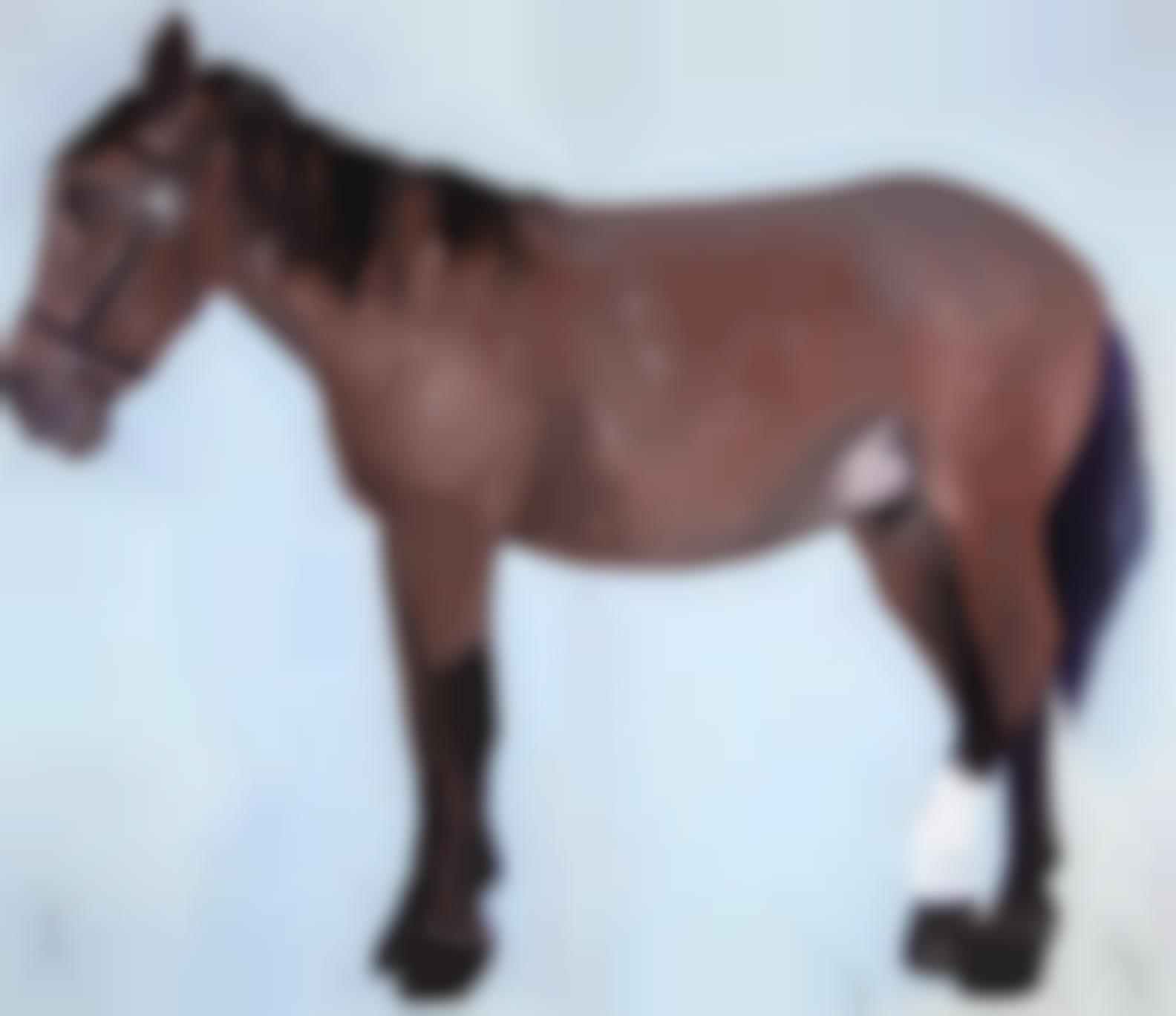Joan Brown-Portrait Of A Horse-1972