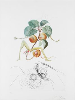 Salvador Dali-Abricot Chevalier (From Flordali/Les Fruits) (F. 69-Lld)-1970