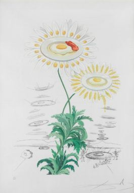 Salvador Dali-Chrysanthemum Frutescens (Marguerite) (From Flora Dalinae) (F. 68-3K)-1968