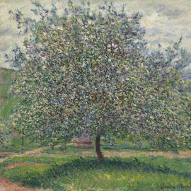 Claude Monet-Le Pommier-1879