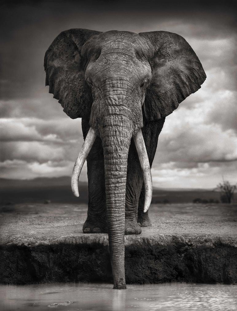 Nick Brandt-Elephant Drinking, Amboseli-2007