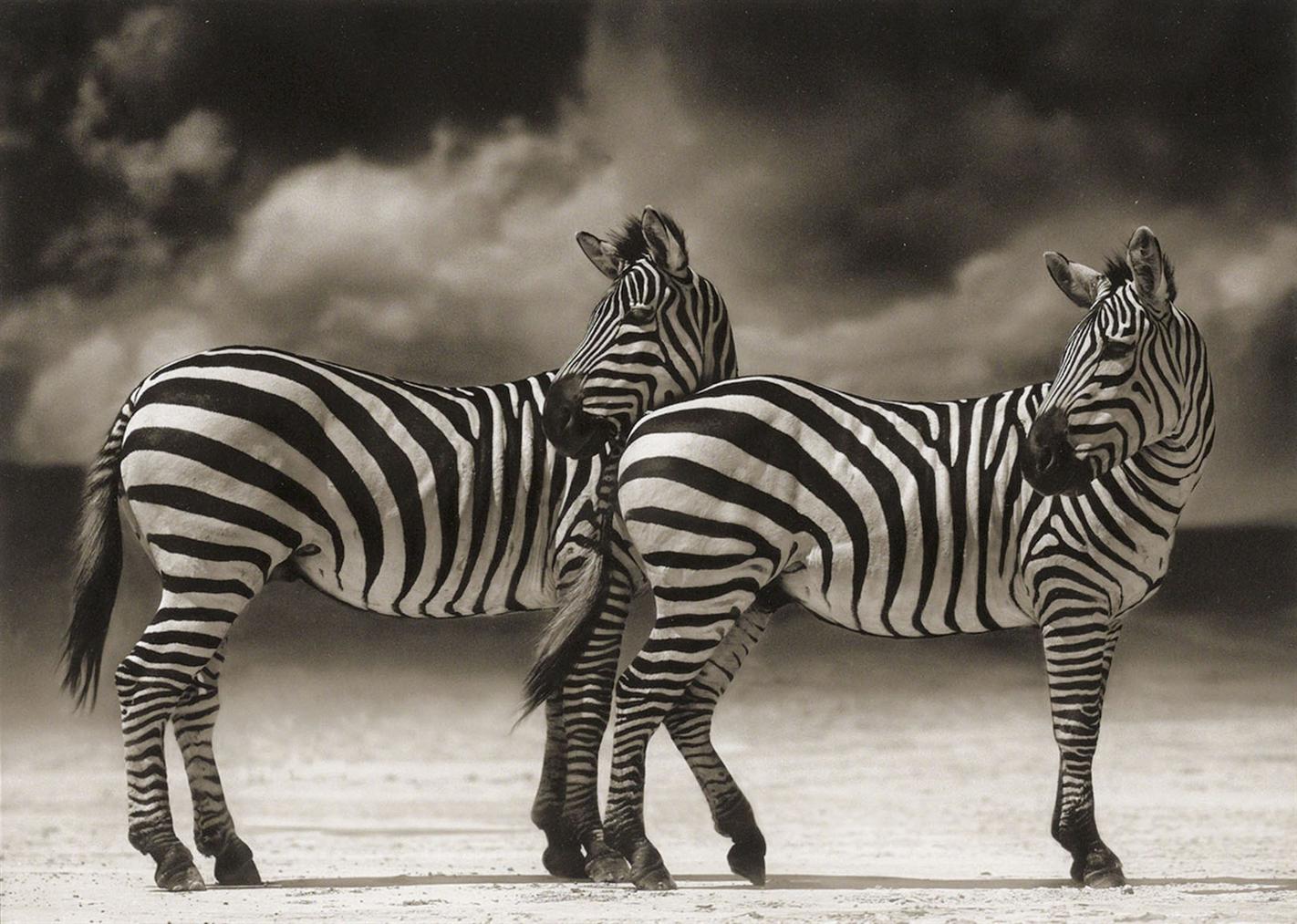 Nick Brandt-Zebras Turning Heads, Ngorongoro Crater-2005