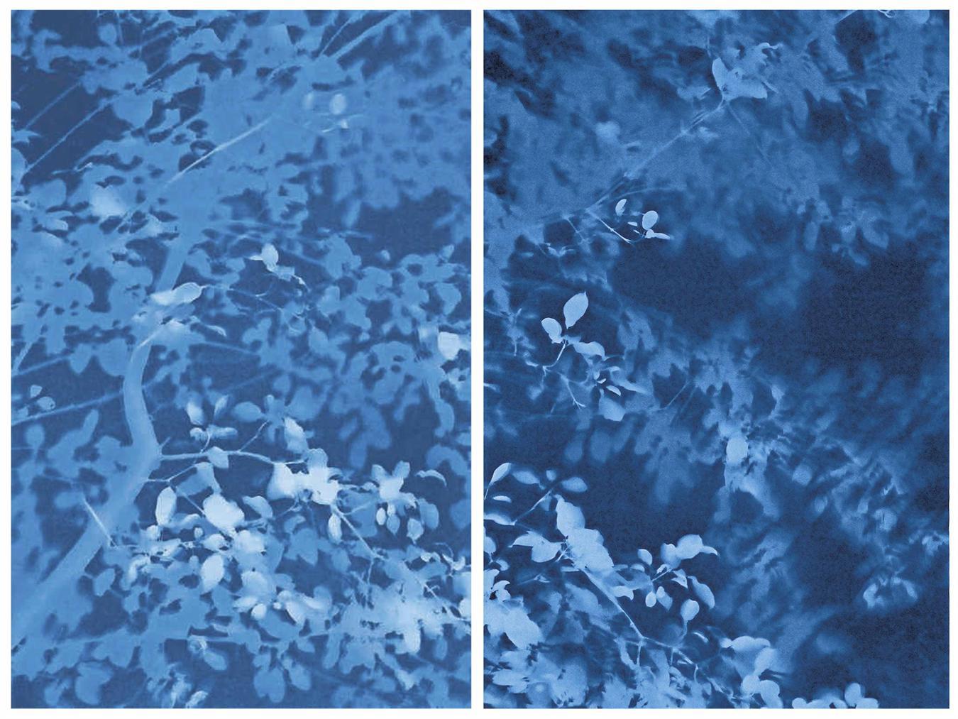 Tom Fels-Arbor 8-10-14 - Nos. 3 & 4 (Buckthorn)-2014