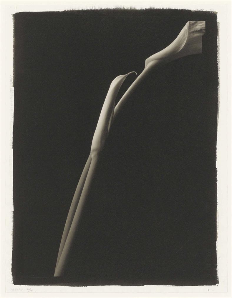 Kenro Izu-Still Life #636-1998