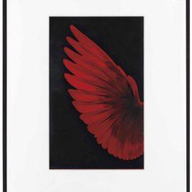 Robert Longo-Study Of Red Humming Bird-2014