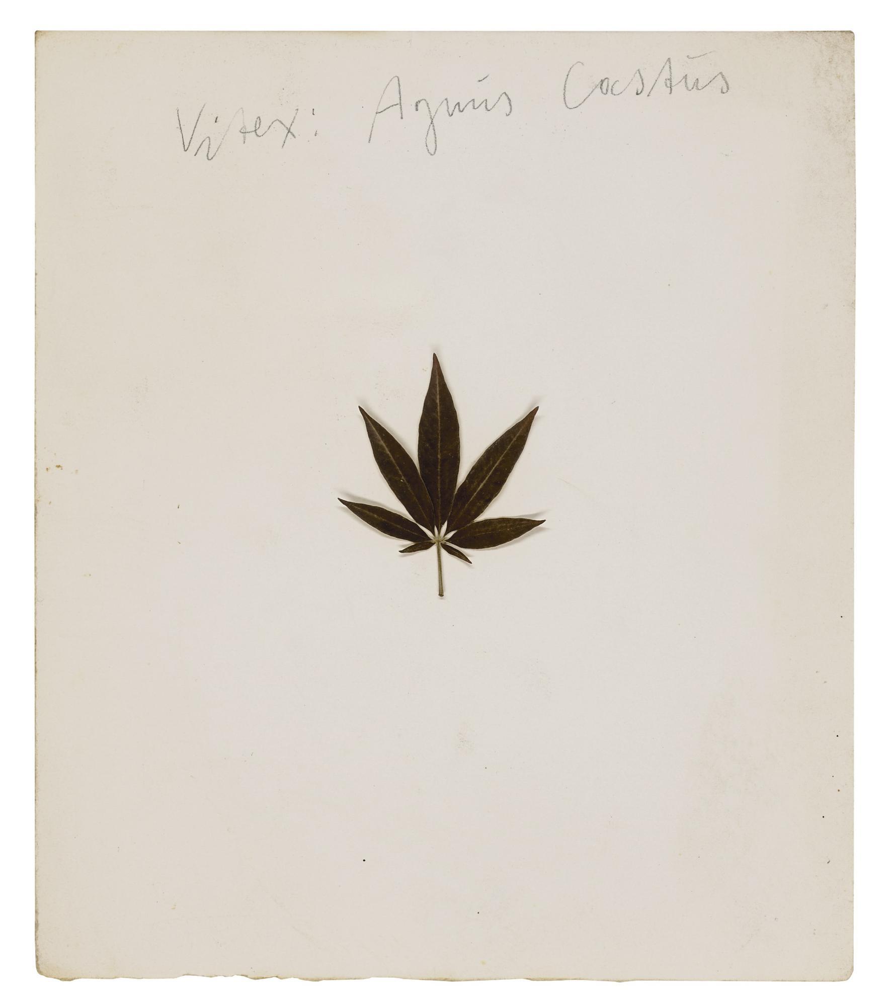 Joseph Beuys-Vitex: Agnus Castus-1972