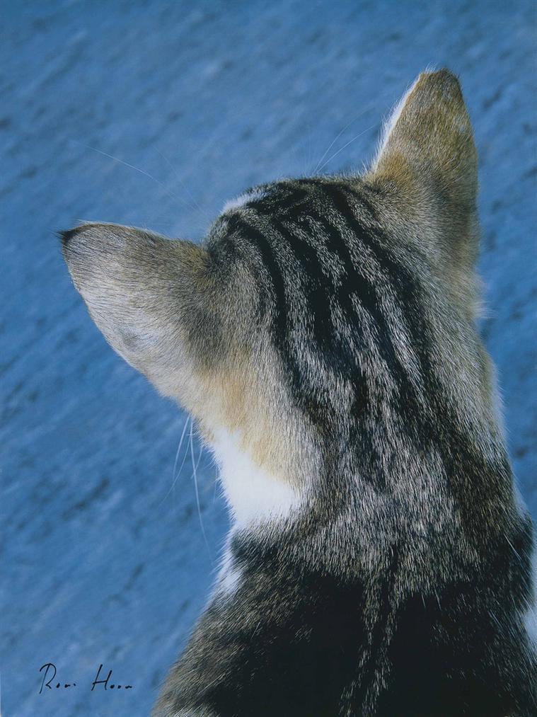 Roni Horn-Cat, 2000-2000