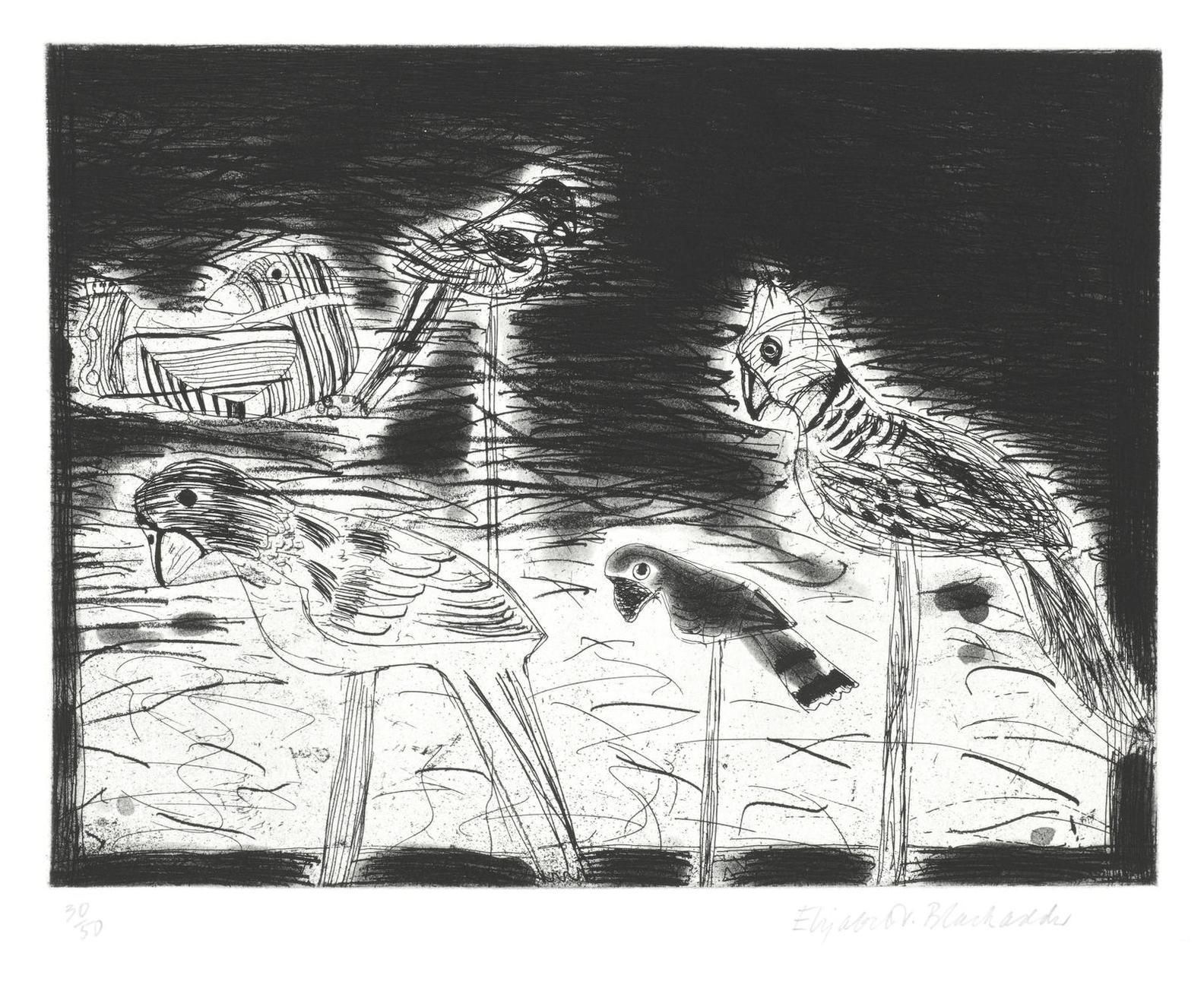 Dame Elizabeth Blackadder Obe Ra - Parrots-1987