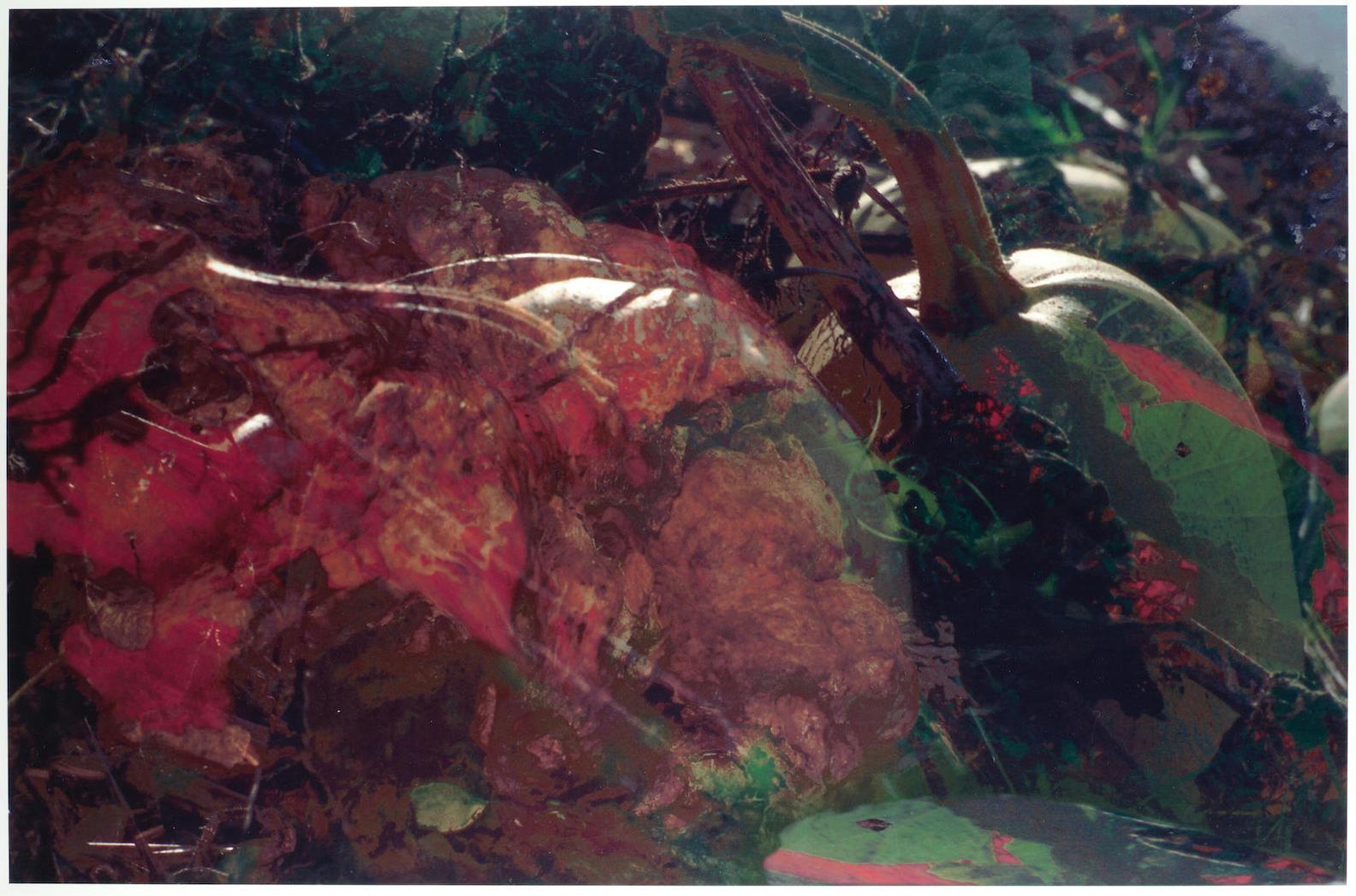 Peter Fischli & David Weiss-Untitled (Pilze) (Fw Funghi 19)-1998