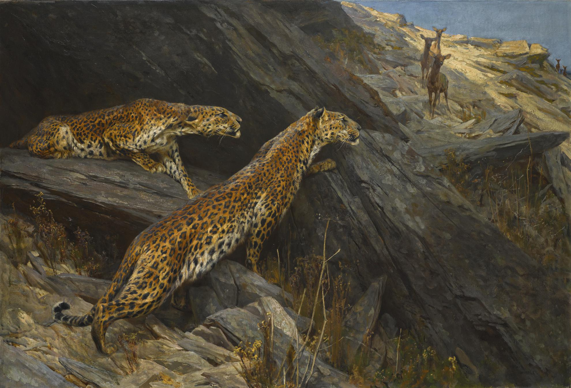Arthur Wardle R.I. R.B.C. - Indian Leopards-
