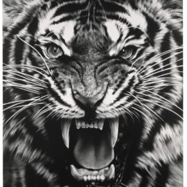Robert Longo-Untitled (Roaring Tiger)-2015