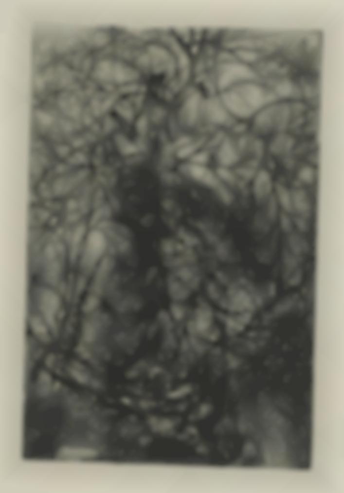 Rodolphe Bresdin-Branchages-1880