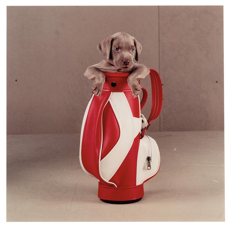 William Wegman-Golfer; Rain Ready (2)-2002
