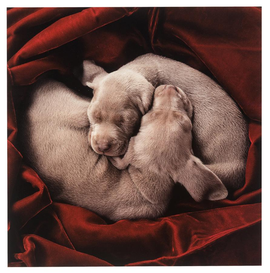 William Wegman-Ying Yang; Cloud Buster (2)-2001