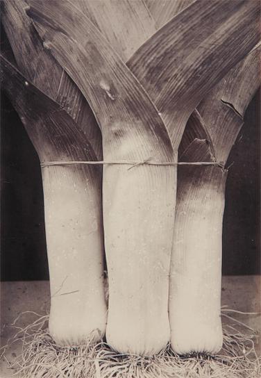 Charles Jones-Leek Prizetaker-1900