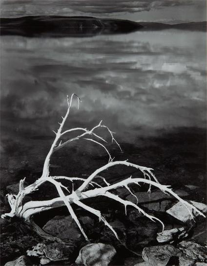 Ansel Adams-White Branches, Mono Lake, California-1950