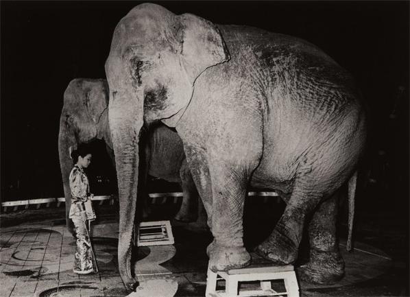 Daido Moriyama-Circus-1973